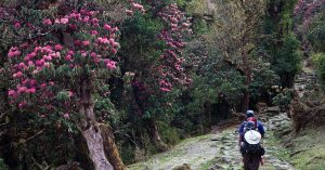 Best trek in Nepal with trekandtours