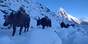 Best Everest trek with TrekandTours.com